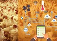 Smart Chicken Farm Solving Solution